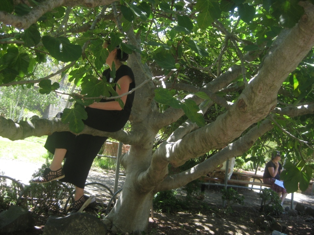 woman sitting in a fig tree Pipemakers park