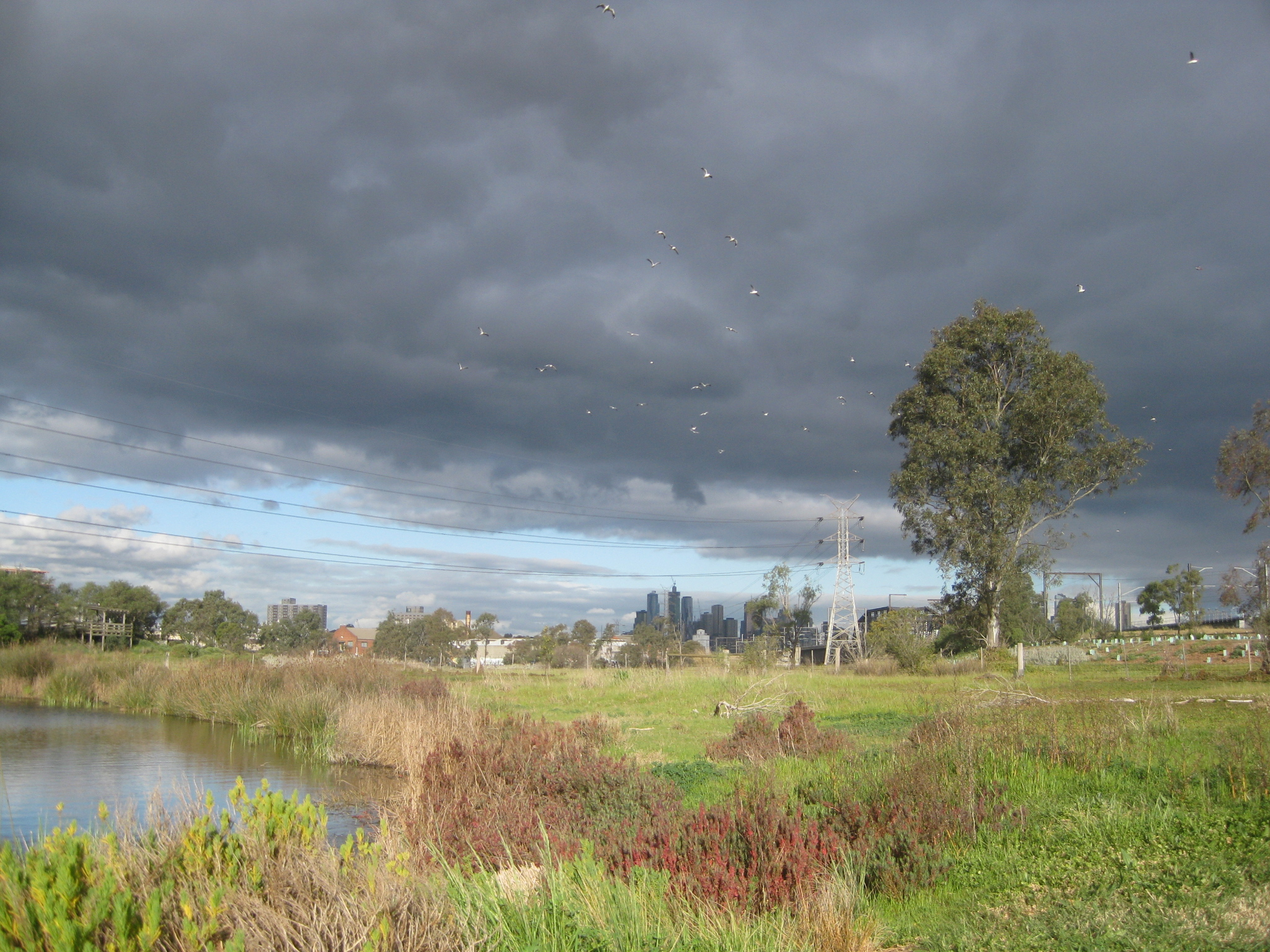 Newell's Paddock wetlands reserve footscray Melbourne stormy sky