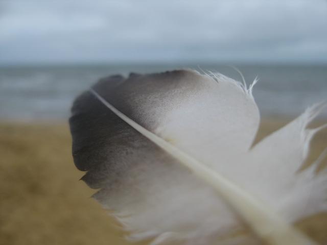 Back Rock beach bay feather