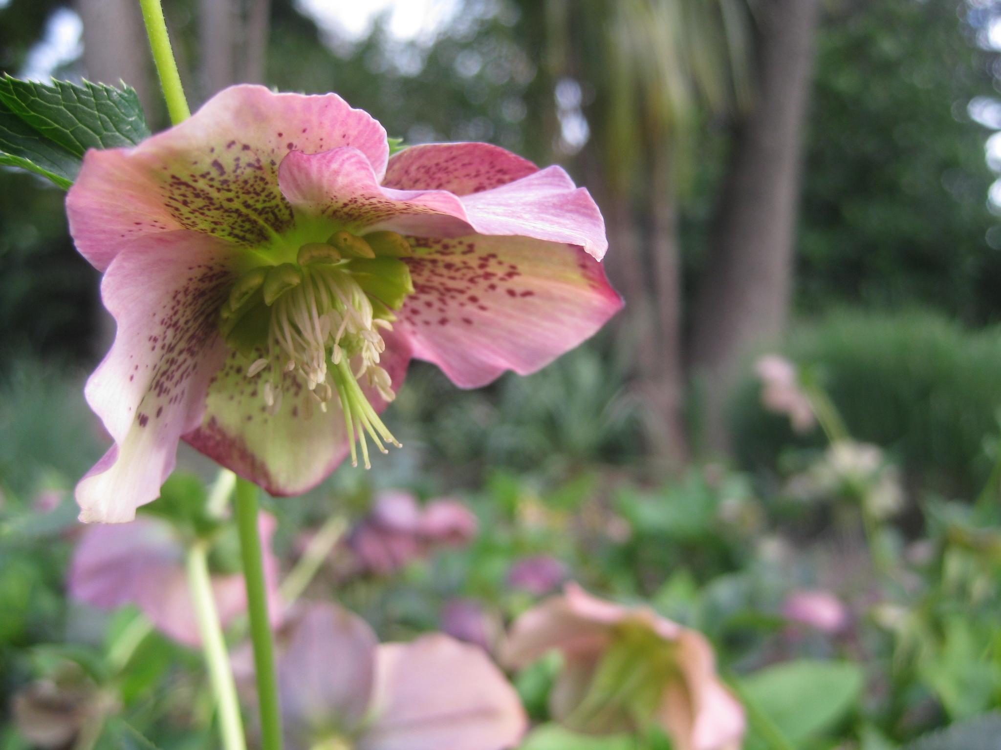 pink flower treasury gardens melbourne sacred ordinary poem Talitha Fraser