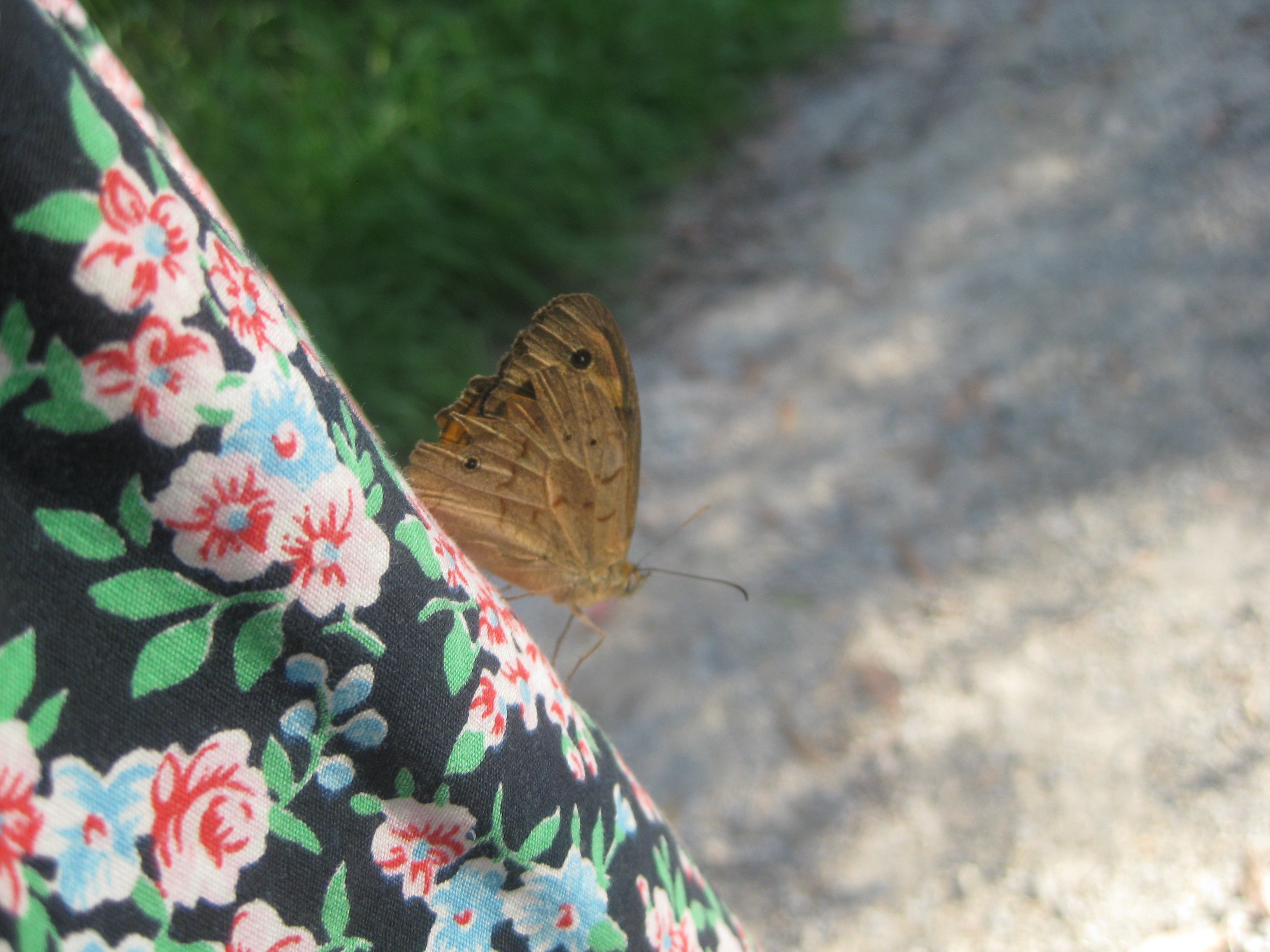 brown butterfly lands on floral dress