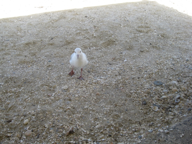 talk to the birds god moves in mysterious ways seagull on the beach may I have this dance