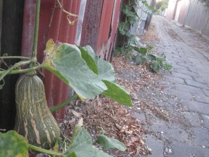 twilight walk home footscray laneways marrow