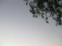 twilight walk home footscray tree branch against sky at dusk twilight