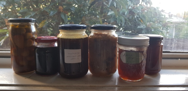 jars of preserves lined up on the window sill intentional community